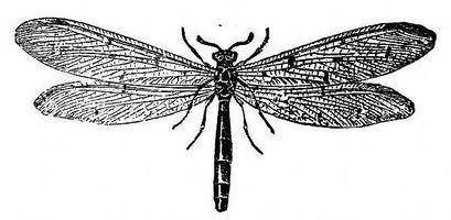 How to Make Termite Spray to Kill Termites thumbnail