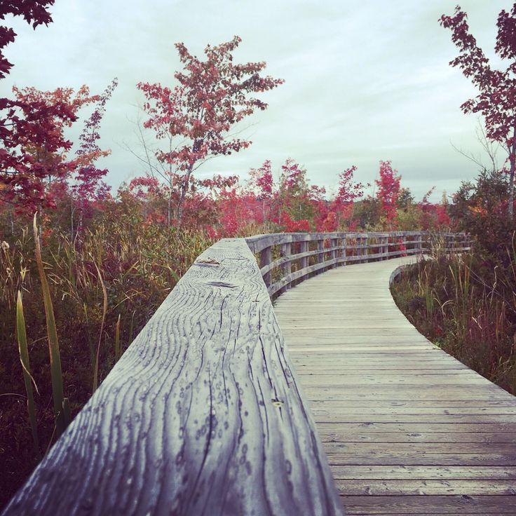 Marais de la Rivière aux Cerises, Magog, Quebec, Canada