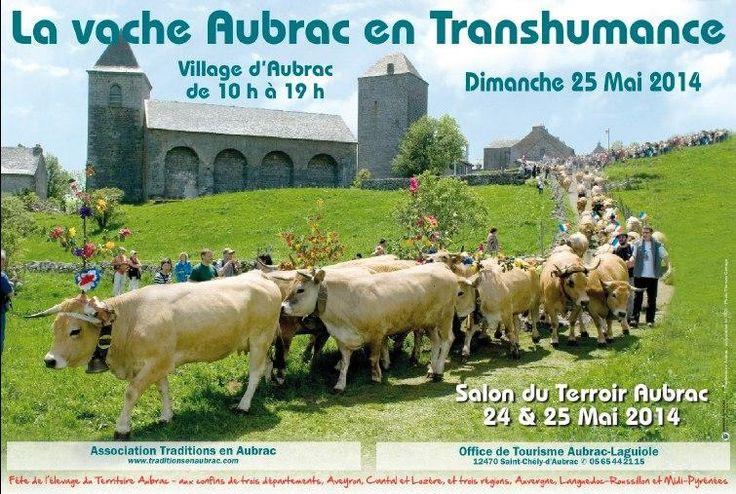Vache Aubrac, fête de la Transhumance. Du 24 au 25 mai 2014 à Aubrac.