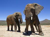 Cape Town Safari Day Tour | Cape Town Safari Day Trip | www.aquilasafari.com