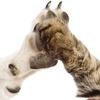 Los Angeles commercial pet sales ban passes vote!