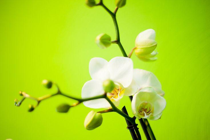 Bedrijfsfotografie bloem IL FIORE. Foto door Marijke Krekels Fotografie