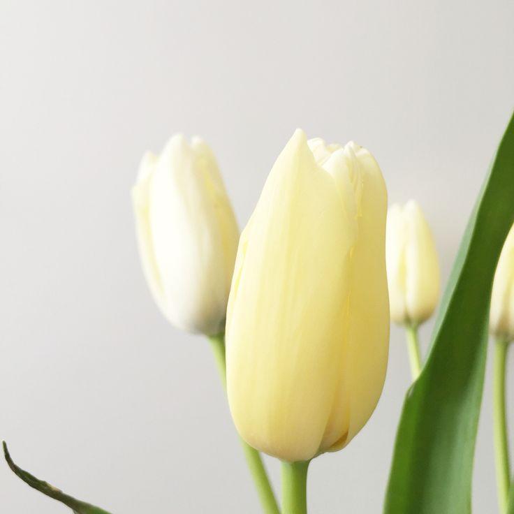 Franse tulpen | Peet likes