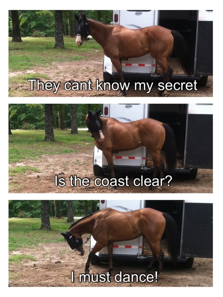 Horse jokes - photo#40