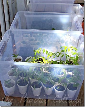Create portable mini greenhouses out of plastic storage containers for starting seeds and nurturing young plants. Genius.