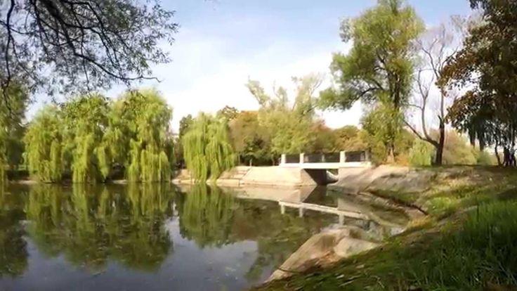 Timelapse осенний Большой Новодевичий пруд