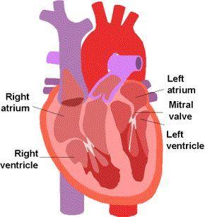 Palpitations? Pounding? Panic Attacks? You Might Have Mitral Valve Prolapse! -- Mitral Valve Prolapse and Thyroid Disease / Thyroid Disease ...
