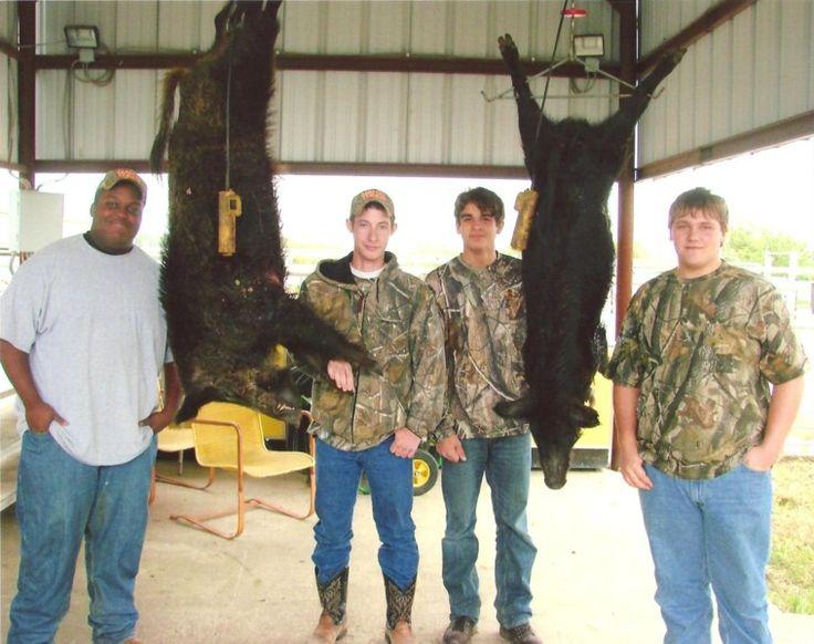 Superior Texas hog hunting ranch - Cotton Mesa