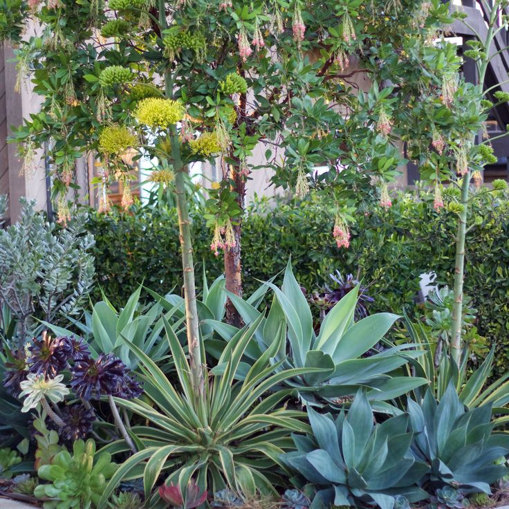 California Friendly landscape still thriving in the winter. A vingette outside of our Landscape Design Studio  http://rogersgardens.com/outdoor-gardens-garden-rooms/