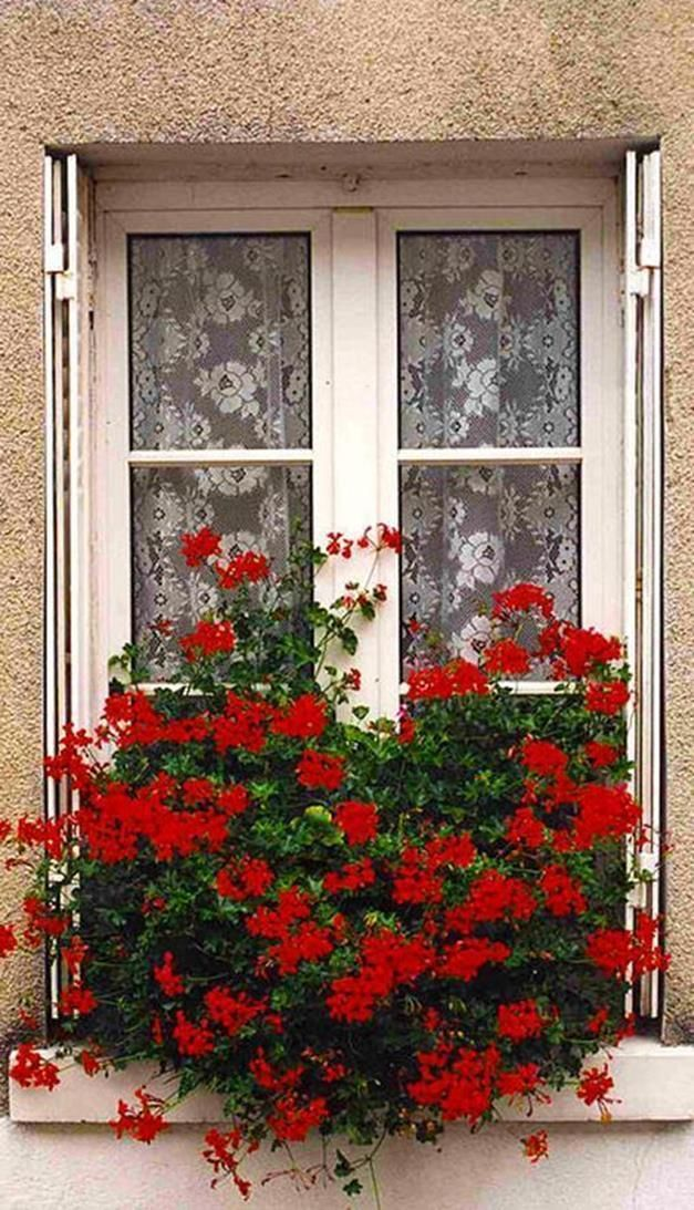 32 Beautiful Ideas Cascading Flowers For Window Boxes With Images
