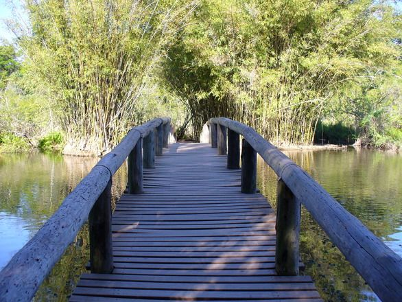 The whole world is a very narrow bridge, and the main thing is not to be afraid at all. —Famoussonglyrics based on the teachings of Rebbe Nachman of Breslov We first encounter the narrow bridge when we're born. As children, we have no choice...