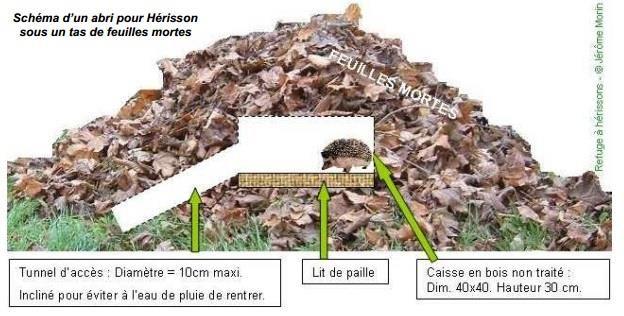 Erinaceus europaeus - Hérisson commun : lui créer un emplacement au jardin