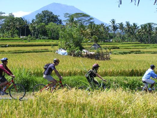 There are stops along the way at a Balinese village, a coffee plantation, a temple and a Banyan Tree shrine. Photo by El...