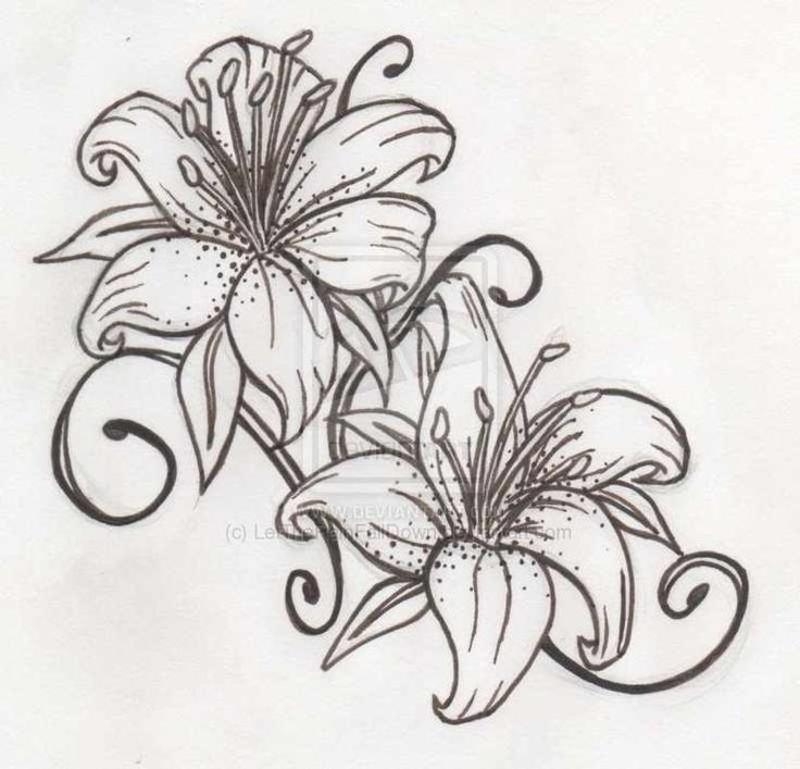 Lily Tattoo Line Drawing : Best drawing flowers images on pinterest cartoon