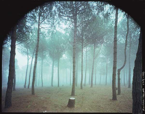 http://www.cultframe.com/wp-content/uploads/guido_guidi-tagliata-1984.jpg