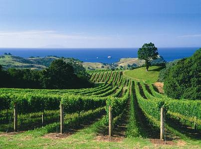 Complexity - New Zealand Fine Wine and Wine Channel TV are hosting a New Zealand Wine Day virtual tasting and cooking demonstration at 6pm Central Standard Time today. Register now to watch the live streaming of the event