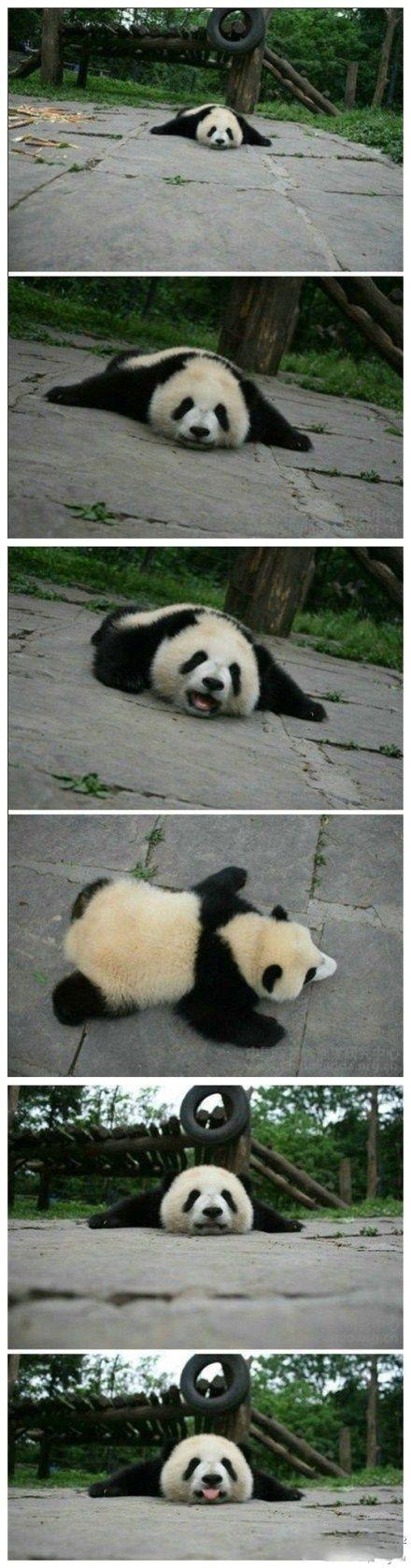 I want to be a panda  <a href='/search?q=Panda' class='pintag' title='#Panda search Pinterest'>#Panda</a>