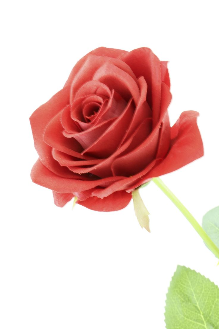 Real touch roses for your loved ones  #realtouch #rose #roses #artificialflowers #flowers #artificial