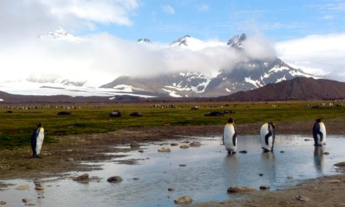 At this year's Environmental Film Festival, Climate Connections will explore the impact of climate change on our world. Ice & Sky and Penguin Counters will be