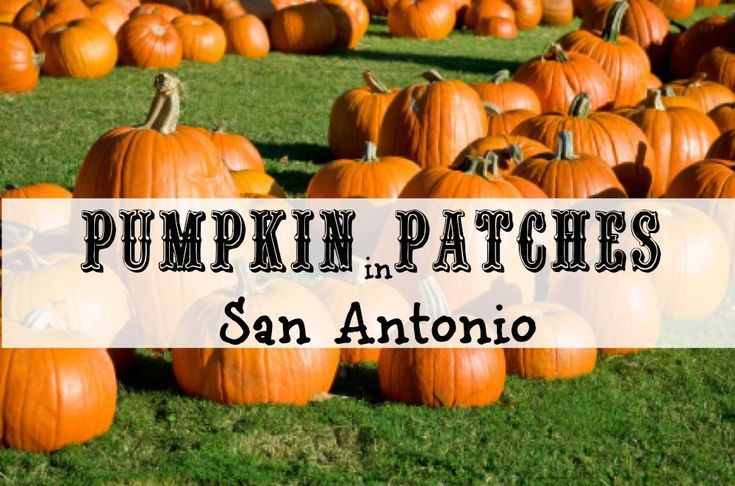 Here is a listing for all the pumpkin patches in San Antonio, Texas and the surrounding areas for 2015 - Hondo, Helotes, Seguin, and more