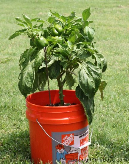 Container gardening for Container gardening ideas