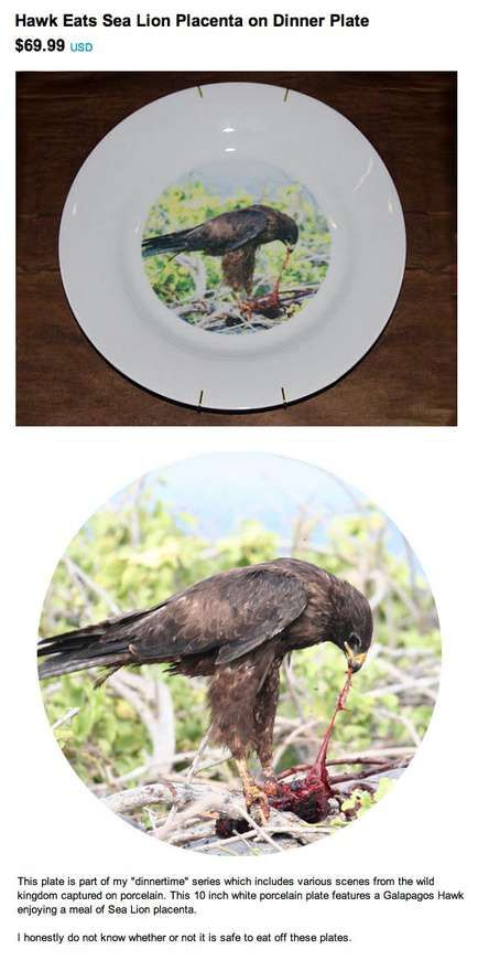 hawk eats sea lion placenta dinner plate - www.regretsy.com