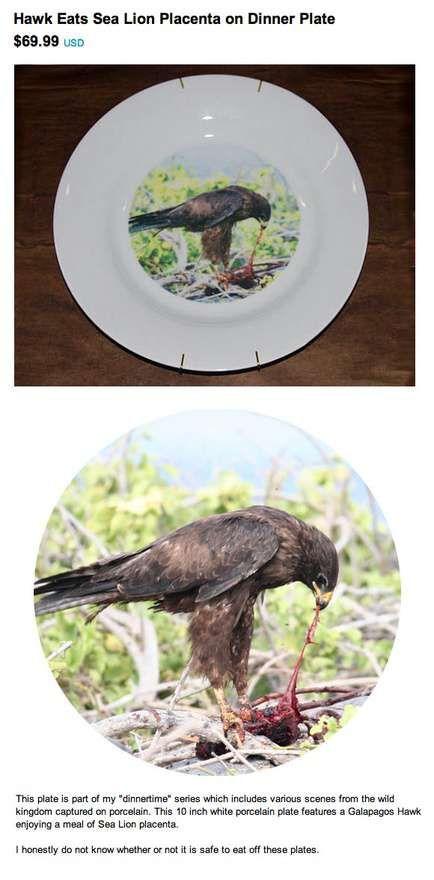 hawk eats sea lion placenta dinner plate - www.regretsy.com