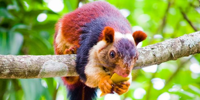 Meet India S Beautiful Technicolor Squirrels Squirrel Animals Squirrel Species