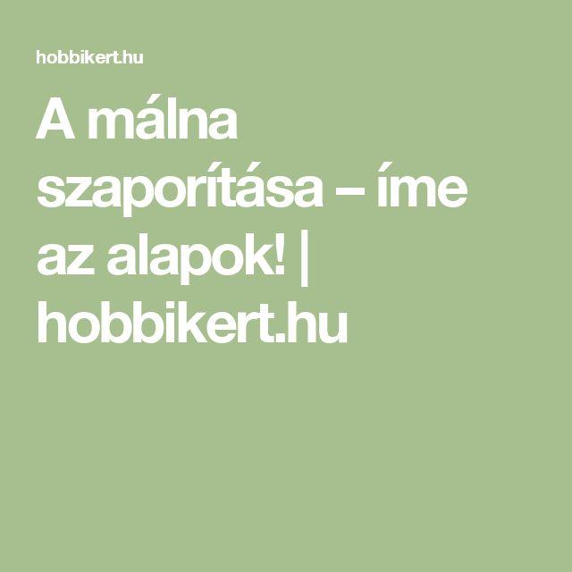 A málna szaporítása – íme az alapok! | hobbikert.hu