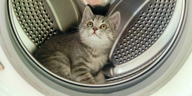 Грязь, накипь, плесень, неприятный запах — верные друзья любой стиральной машины и страшный сон её обладателя. Но есть способы легко и быстро справиться даже с самыми застарелыми проблемами.
