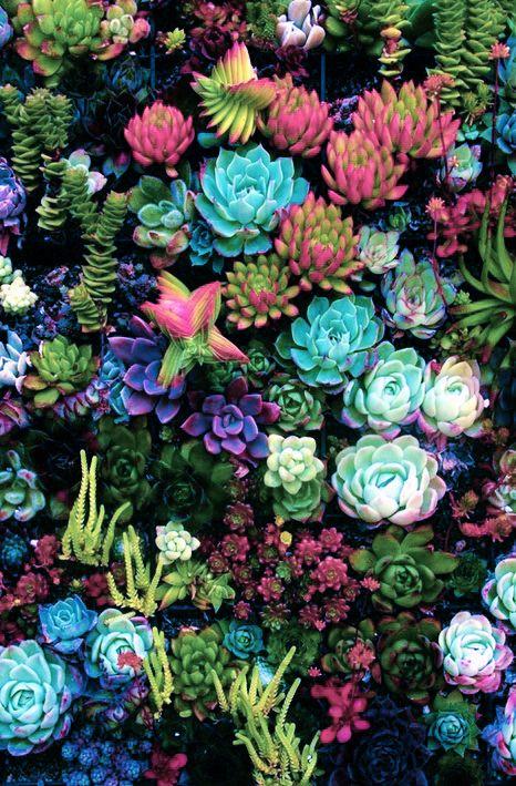 Watercolour Cacti and Succulents wallpaper - crumpetsandcrabsticks ...