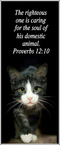 The righteous  one is caring  for the soul of  his domestic  animal. Proverbs 12:10. Jehovah expects us to be kind to animals.