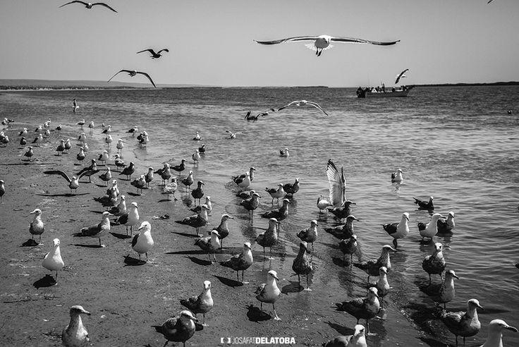 Taking flight #josafatdelatoba #cabophotographer #landscapephotography #holbox #quintanaroo #birds #flight
