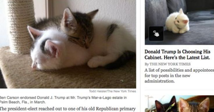 """New Google Chrome Extension Replaces All Images Of Donald Trump With Kittens -   Are you kitten me right meow?! There's a new Google Chrome extension that's trying to """"Make America Kittens Again"""" – and it's amazing!  ... See more at https://www.icetrend.com/new-google-chrome-extension-replaces-all-images-of-donald-trump-with-kittens/"""