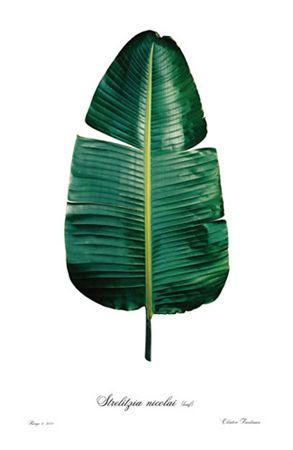 Hoja: Cada una de las partes, generalmente verdes, planas y delgadas, que nacen en la extremidad de las ramas o en los tallos de las plantas. (Sustantivo)