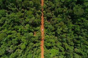 A car cross the road in rainforest area in Mato Grosso