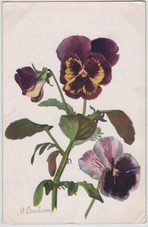 Pansies, by artist H.Bartrim, c.1917 postcard