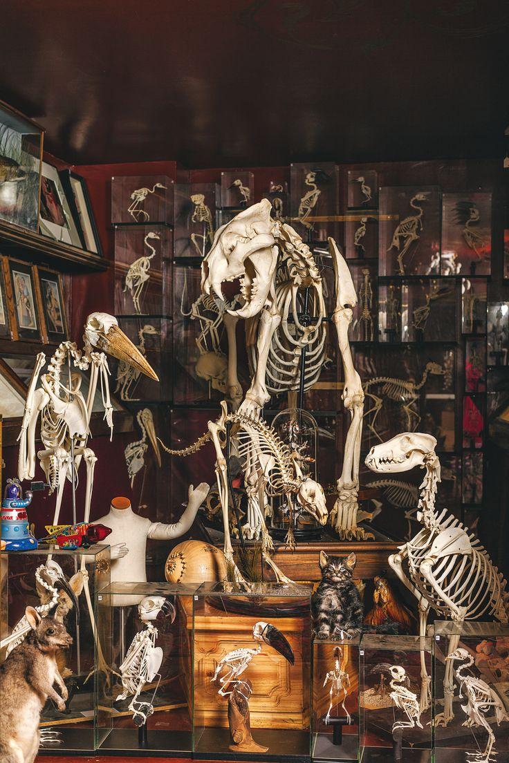Viktor Wynd Museum of Curiosities, Fine Art & Natural History - Selection of skeletons (photograph by Oskar Proctor)