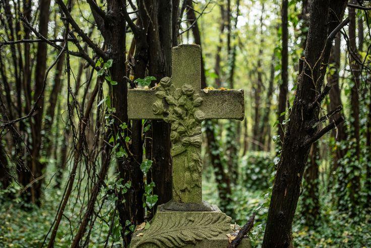 Elfeledett, titkos kis temetőt találtunk egy nagy temetőben | Magyarország kúl