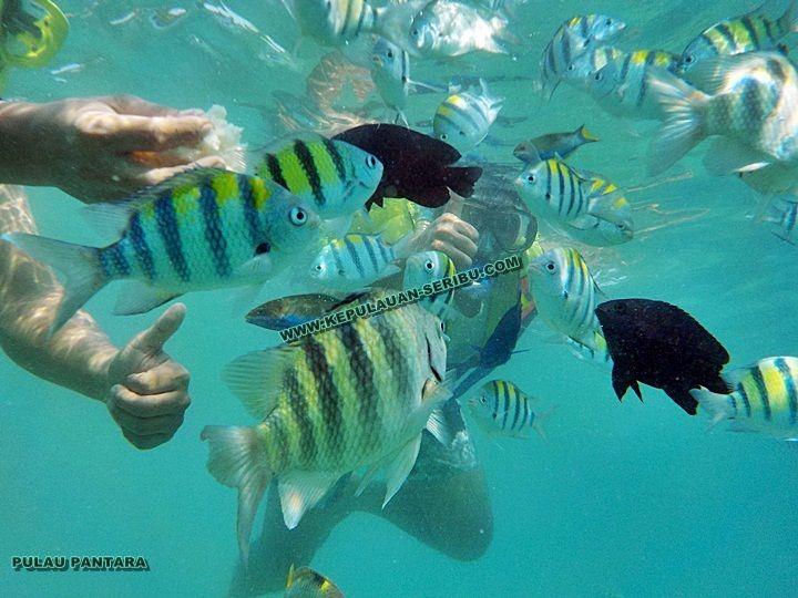 Pulau Pantara Island Travelers from Abroad
