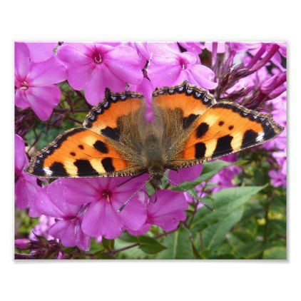 Little Fox Butterfly on Pink Phlox Flower Photo Print - unusual diy cyo customize special gift