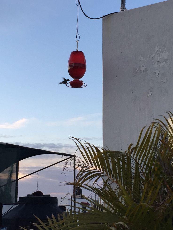 Colibrí #colibri #dia #hermoso #guadalajara #mexico