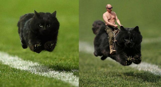 Черный кот выскочил на поле во время матча по регби и стал героем фотожаб #лайфхаки #технологии #вдохновение #приложения #рецепты #видео #спорт #стиль_жизни #лайфстайл