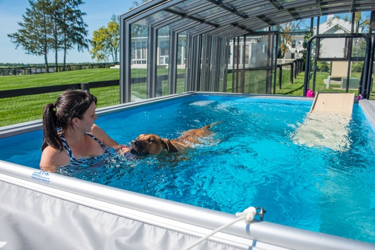 Mystiko Kennel uses an Endless Pool for canine aquatic therapy. Dogs love to swim, making water therapy perfect for rehab.