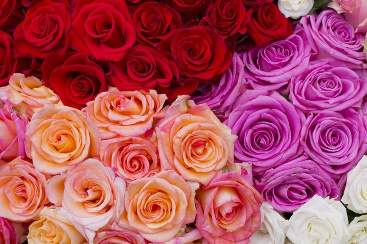 Best Valentine's Day flower deals at grocery stores