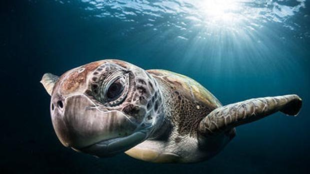 el hongo denominado Zalerion maritimum es capaz de degradar los plásticos que se acumulan en el mar. ABC