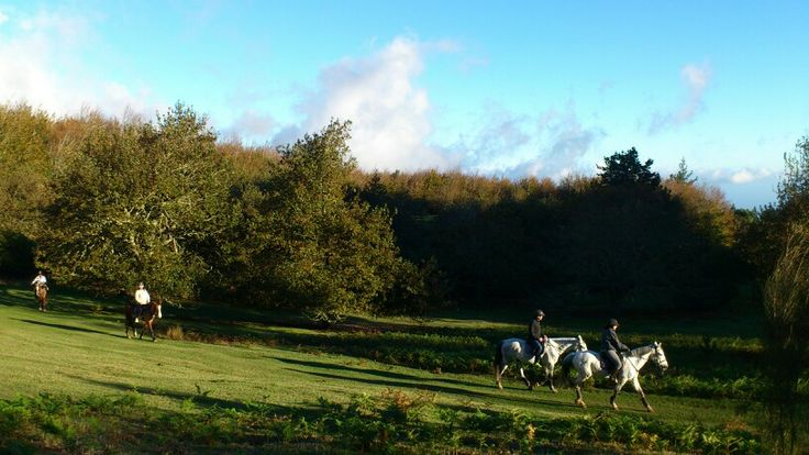 Autumn #sun #madeira #horsebackriding #sonne #reiten #soleil #cheval #pferd #équitation