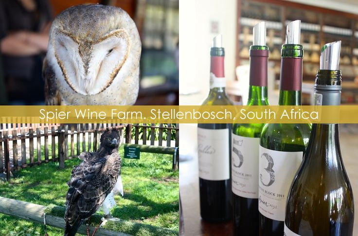 Wine tasting, picnicking, and Eagle Encounters at Spier Wine Farm in Stellenbosch, South Africa, the country's winelands region.