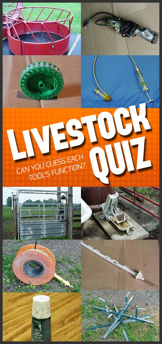 Multiple-choice E-quiz! Learn more about beef, dairy, horses, poultry, sheep, and forages.