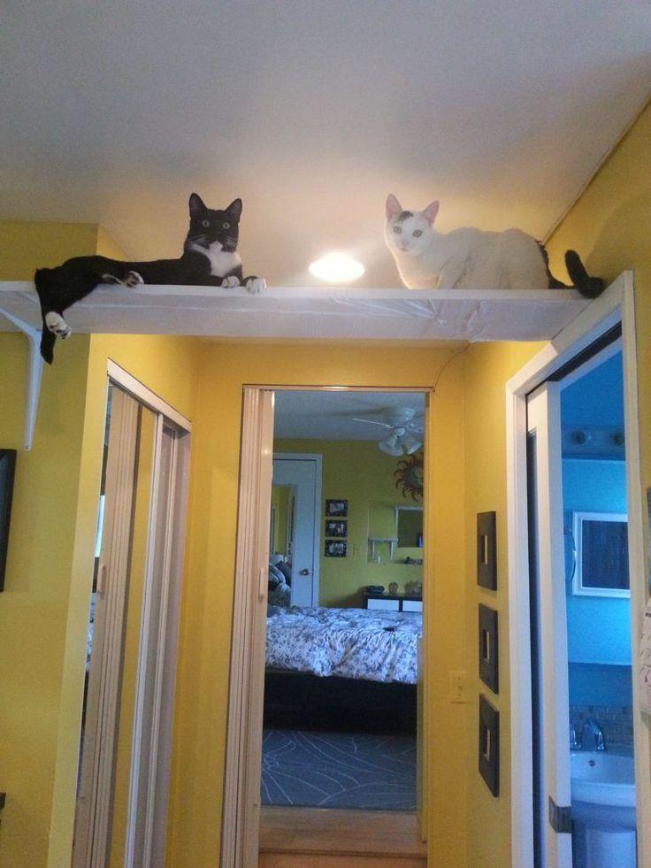 Wandregal-für-Katze-diy – Wohnung Xenia